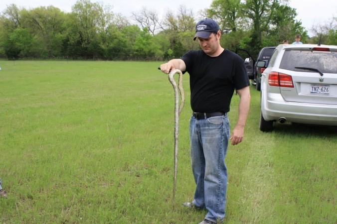 snakebody