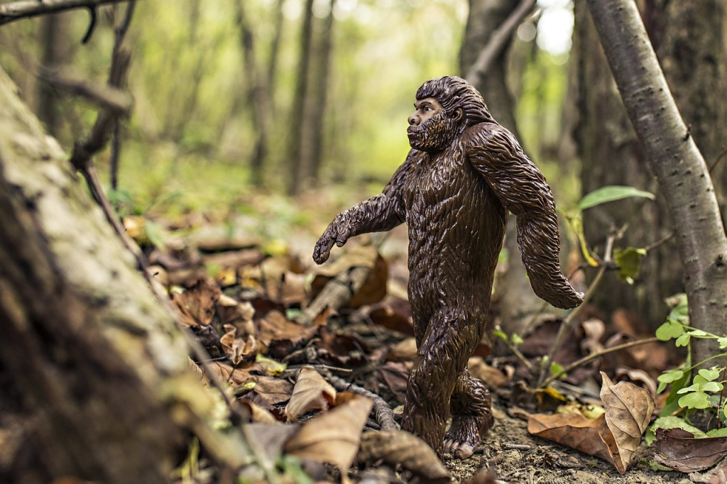 bigfoot-542546_1280